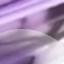 Pastel Purple Tortoise