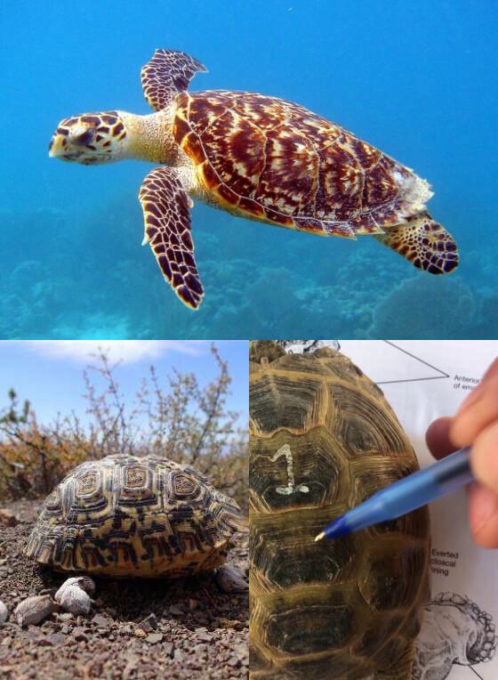 History Tortoiseshell Sunglasses