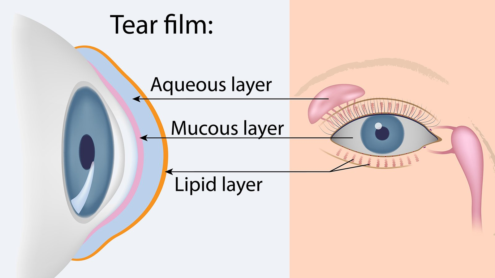 What is a tear film?